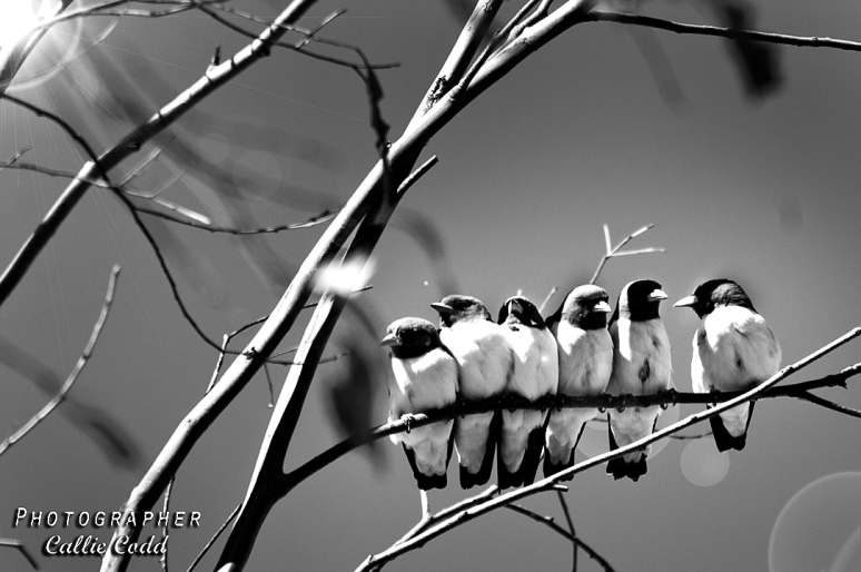 Black and white birds