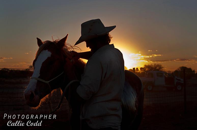 Sunset Cowboy.