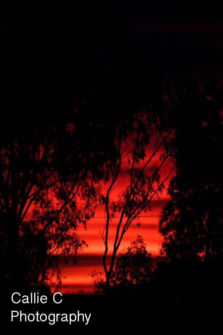 grass hoppers,windscreen,sunset_0016