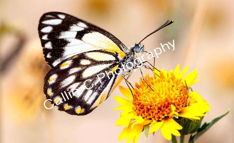 butterflies_1461