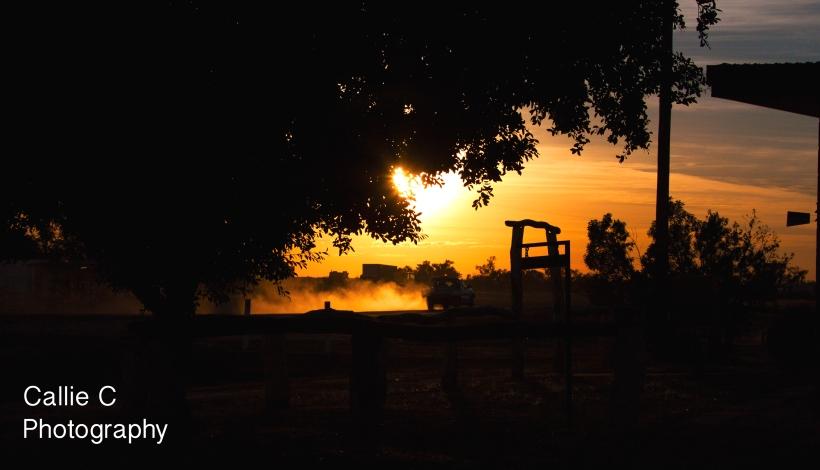 walkers,lisa,sunrise_1206