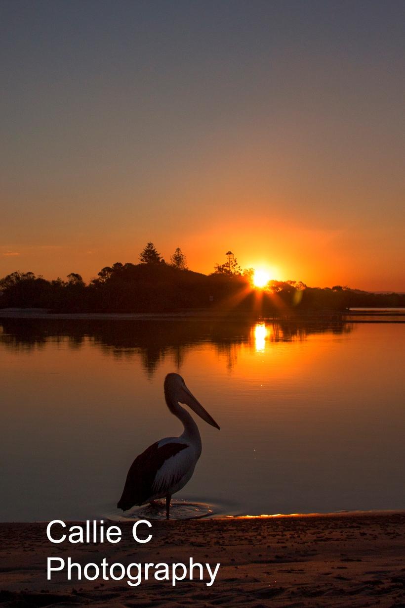 avo walk sunset_2267