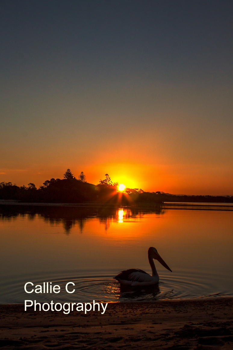 avo walk sunset_2268