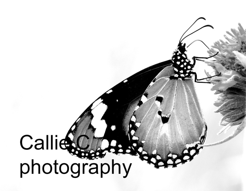 butterflies_1437