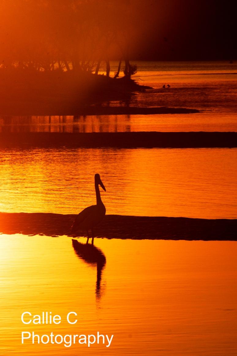avo walk sunset_2235