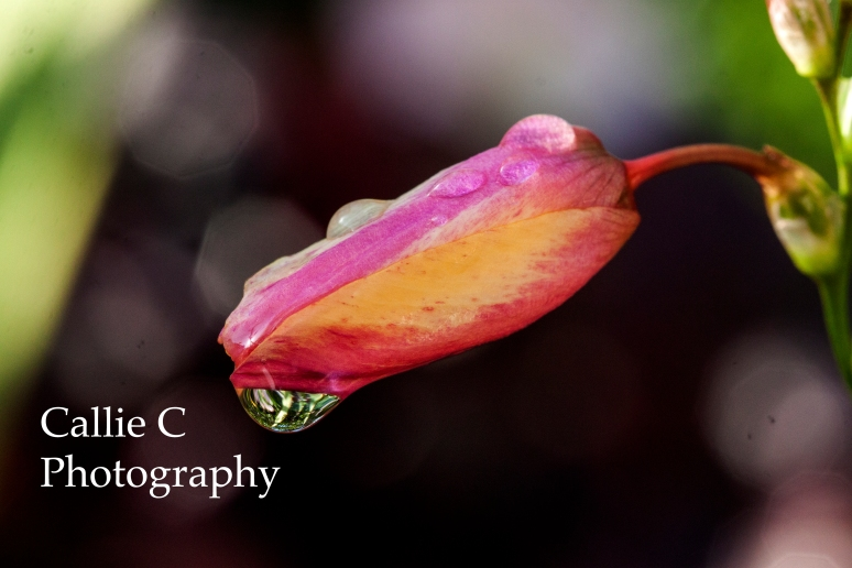 Joans garden_5451