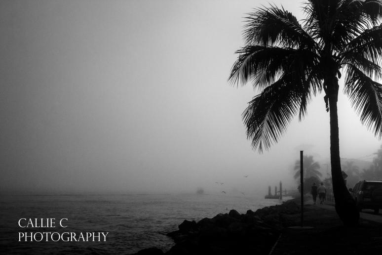 20150117_Sea Fog_6975