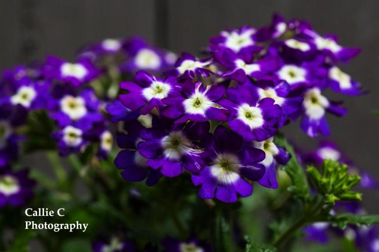 flowers_2308_2423